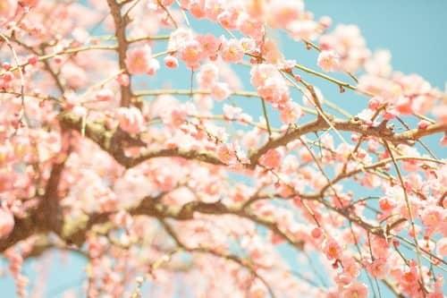 自然と運気が上がっていく!春分...